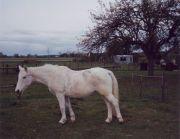 1990Ariane05-k