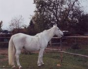 1990Ariane06-k